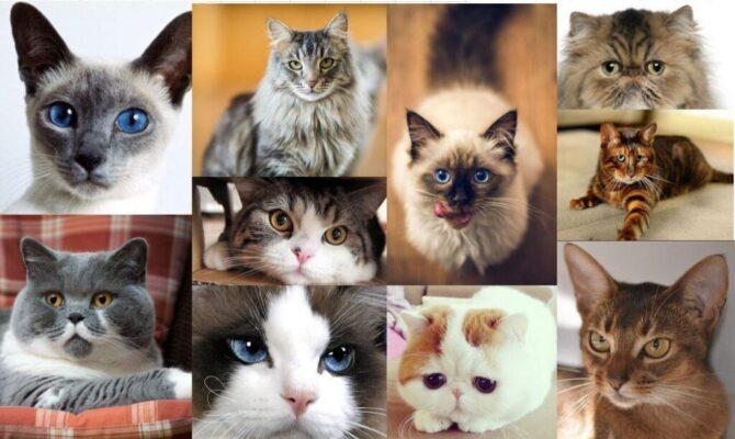 گربه | پرشین پت لند