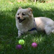 اسباب بازی توپ چراغدار و صدادار ضربه ای مخصوص سگ و گربه | پرشین پت لند