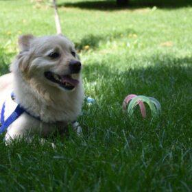 اسباب بازی دندانگیر حلقه ژلاتینی سگ و گربه کد z207 | پرشین پت لند