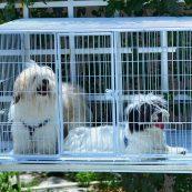 قفس حیوانات خانگی   ایران چکاوک