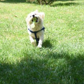 اسباب بازی دندانگیر دمبل و گرز مخصوص سگ | ایران چکاوک